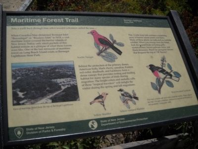 Maritime Forest Trail Marker image. Click for full size.