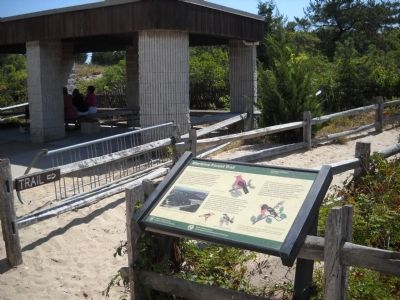 Marker in Barnegat Lighthouse State Park image. Click for full size.