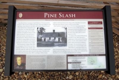 Pine Slash Marker Photo, Click for full size
