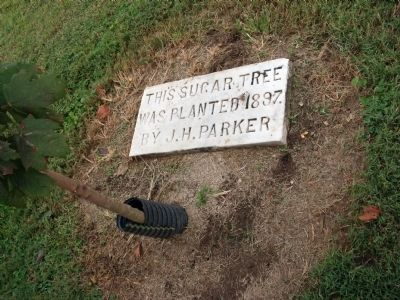 Tree Marker - - (Original) Sugar Tree planted 1897 by J. H. Parker image. Click for full size.