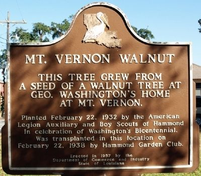 Mt. Vernon Walnut Marker image. Click for full size.