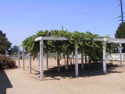 Grape Arbor image. Click for full size.