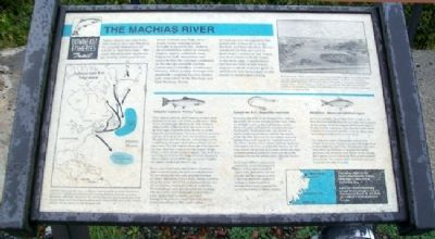 The Machias River Marker Photo, Click for full size