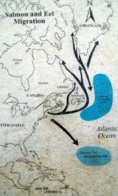 Migration Map on The Machias River Marker image. Click for full size.