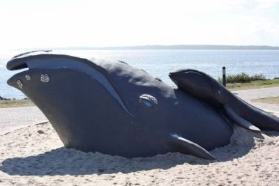 North Atlantic Right Whale , Keith Jennings sculpture image. Click for full size.