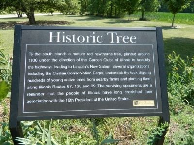 Historic Tree Marker image. Click for full size.