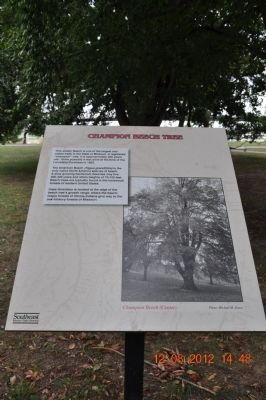 Champion Beech Tree Marker image. Click for full size.