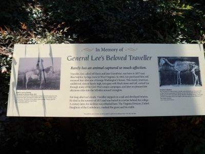 General Lee�s Beloved Traveller Marker Photo, Click for full size