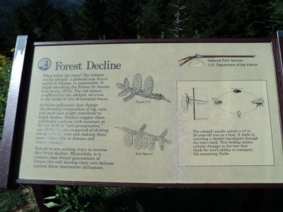 Forest Decline Marker Photo, Click for full size