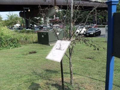 Chambers Pear Tree Marker Photo, Click for full size