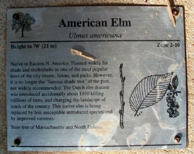 American Elm Marker Photo, Click for full size