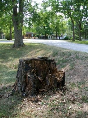 Wilder's Pecan Tree Stump and Marker image. Click for full size.
