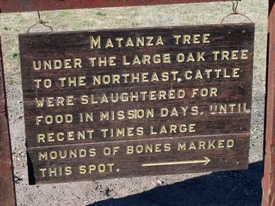 Matanza Tree (Killing or Slaughtering Tree) image. Click for full size.