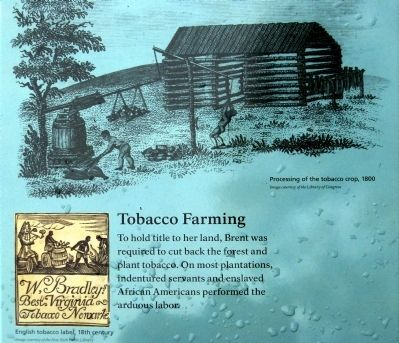 Tobacco Farming image. Click for full size.