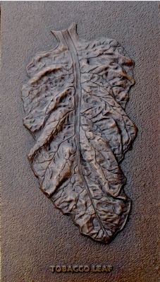 Tobacco Leaf image. Click for full size.