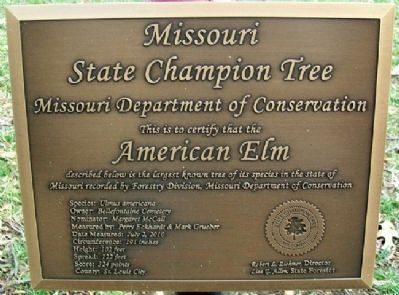 American Elm Marker image. Click for full size.
