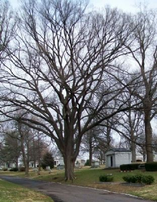 MO State Champion American Elm and Markers image. Click for full size.