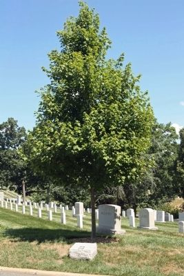 U. S. Army Reserves Marker and Memorial October Glory Red Maple Tree image. Click for full size.