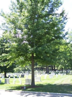 63rd Infantry Division Marker and Memorial Pin Oak Tree image. Click for full size.