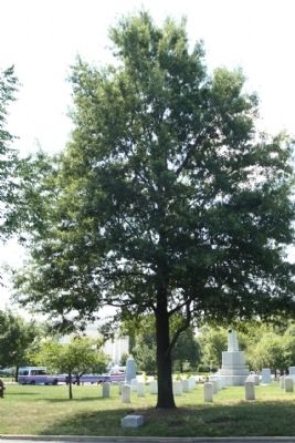 Landing Craft Support Ships Marker and Willow Oak Memorial Tree image. Click for full size.