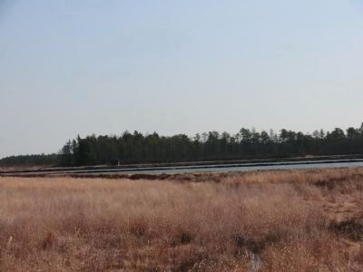 The Bogs image. Click for full size.