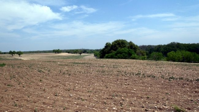 Battlefield view. Hondo Creek is at the treeline on the right. image. Click for full size.