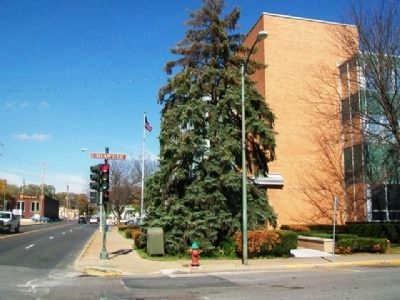 Freedom Tree (Evergreen) at US Post Office image. Click for full size.