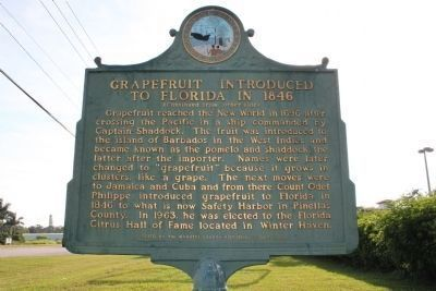 Grapefruit Introduced to Florida in 1846 Marker Side 2 image. Click for full size.