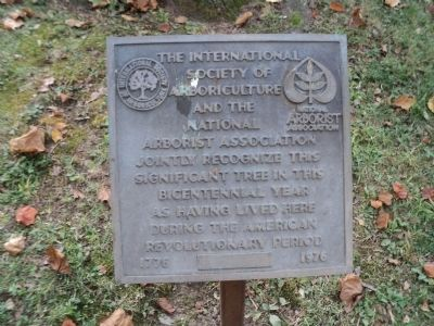 Revolutionary War Witness Tree Marker Photo, Click for full size