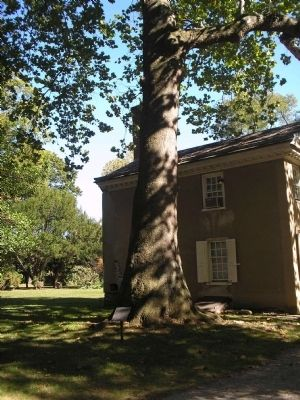 Revolutionary War Witness Tree Photo, Click for full size