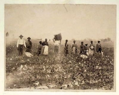 Land of cotton image. Click for full size.