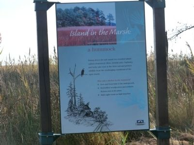 Island in the Marsh: a hummock Marker image. Click for full size.