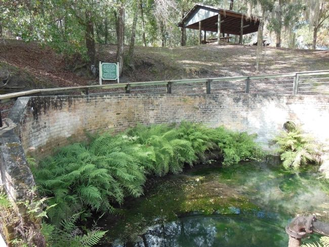 Gainesville's Artesian Spring image. Click for full size.