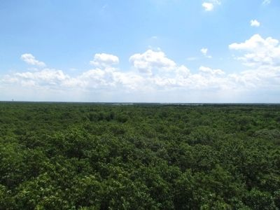 View from Top of Fire Tower image. Click for full size.