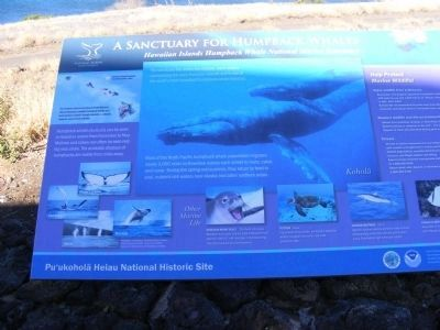 This marker-A Sanctuary for Humpback Whales in near the Pu'ukohola Heiau Marker image. Click for full size.