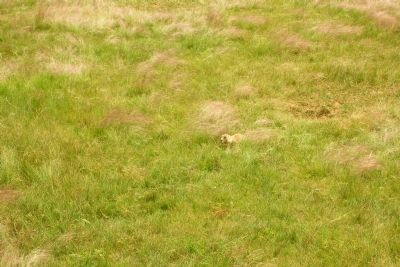 Black-Tailed Prairie Dog image. Click for full size.