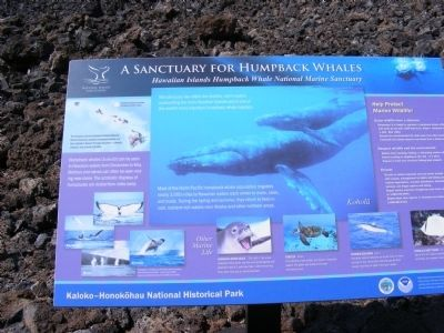 A Sanctuary for Humpback Whales Marker image. Click for full size.