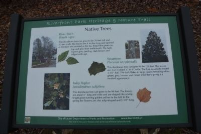 Native Trees image. Click for full size.