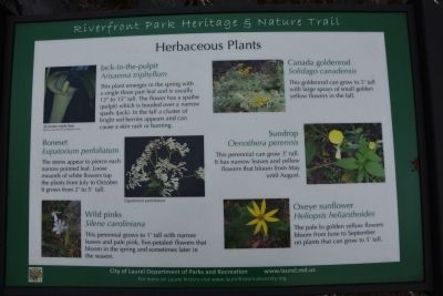 Herbaceous Plants image. Click for full size.