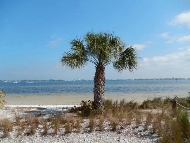 Palm Tree & Manatee River image. Click for full size.