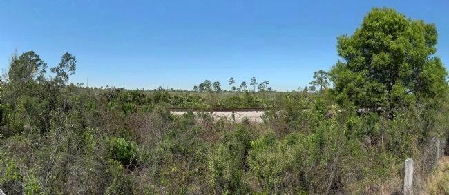 Archbold Biological Station and Preserve image. Click for full size.
