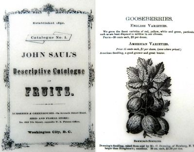 The cover and a page of Saul's Catalogue image. Click for full size.