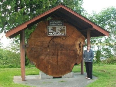 Douglas Fir Cross-section and Marker image. Click for full size.