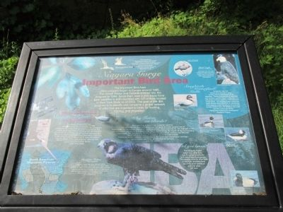 Niagara Gorge Important Bird Area Marker image. Click for full size.