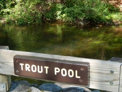 Eastern Brook Trout Pool image. Click for full size.