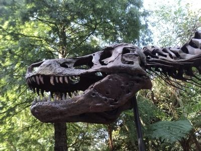 Closeup of Tyrannosaurus Rex Skull image. Click for full size.