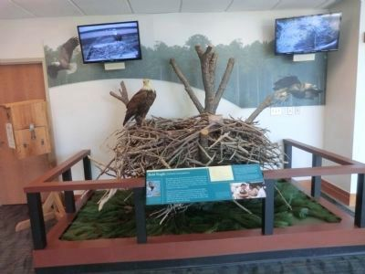 Visitor Center-Eagle's Nest display with monitor image. Click for full size.