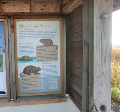 Muskrat and Nutria Marker image. Click for full size.