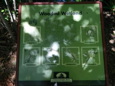 Wooded Wetland Marker image. Click for full size.