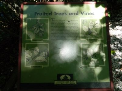 Fruited Trees and Vines Marker image. Click for full size.